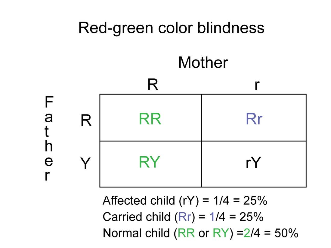 worksheet Dna The Molecule Of Heredity Worksheet Answers – Heredity Worksheets